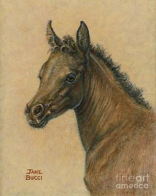 Poster featuring the painting Bay Colt by Jane Bucci