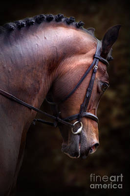 Bay Horse Head Poster by Ethiriel  Photography