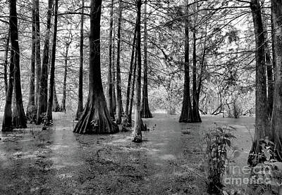 Bayou Swamps Black White  Poster