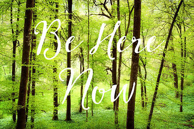 Be Here Now Green Forest In Spring Poster by Matthias Hauser