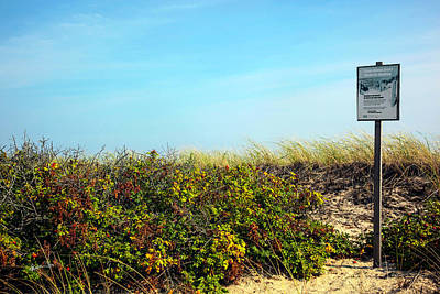 Poster featuring the photograph Be Kind To The Dune Plants by Madeline Ellis