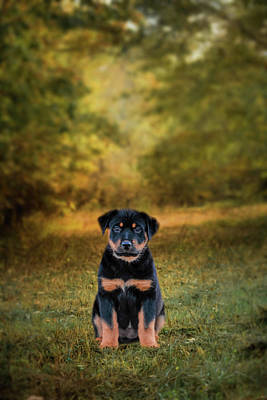Be My Friend Puppy Dog Art Poster by Jai Johnson
