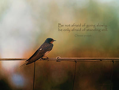 Be Not Afraid Of Going Slowly Poster by Maria Angelica Maira