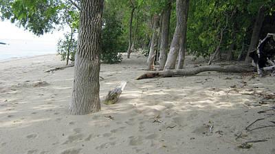 Beach At The Lake Poster