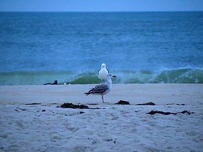 Beach Birds Poster