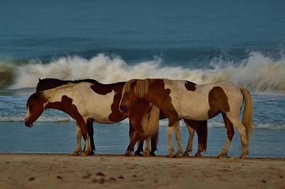 Beach Bum Ponies Poster