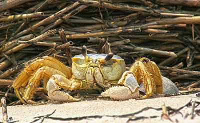 Beach Crab Poster