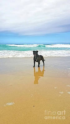 Poster featuring the photograph Beach Dog And Reflection By Kaye Menner by Kaye Menner