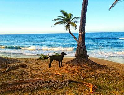 Beach Dog  Poster