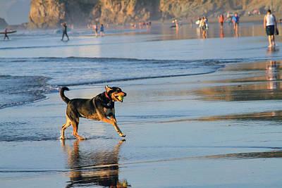 Beach Dog Playing Fetch Poster by Bonnie Follett