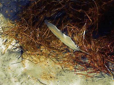 Beach Feather Poster by Robert Bissett