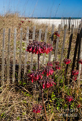 Beach Fence And Red Flowers Poster