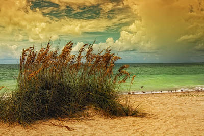 Beach Grass Poster by Gina Cormier