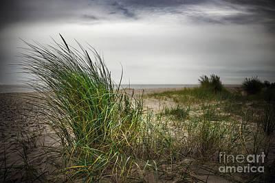 Beach Grass Poster by Svetlana Sewell