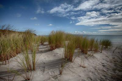 Beach Grasses Poster by Anne Christie