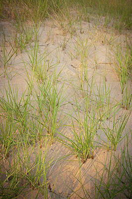 Beach Grasses Number 10 Poster