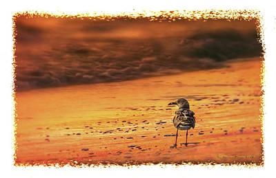 Beach Gull Poster