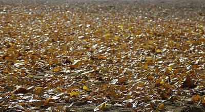 Beach Of Autumn Leaves Poster