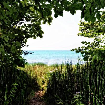 Beach Path With Snake Grass Poster