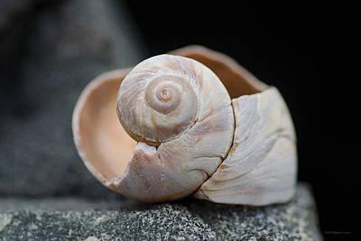 Beach Snail Poster