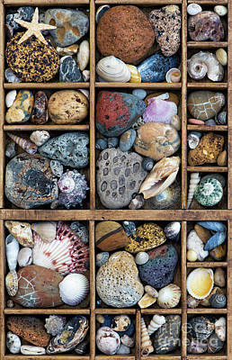 Poster featuring the photograph Beach Treasures by Tim Gainey