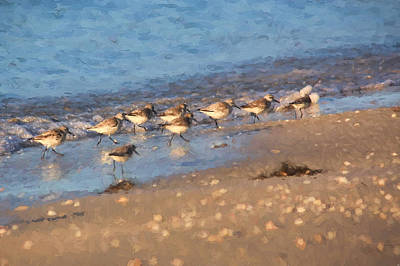 Beachcombers - Sandpipers On The Beach Poster by HH Photography of Florida