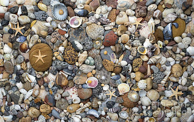 Beachcombing Pattern Poster by Tim Gainey