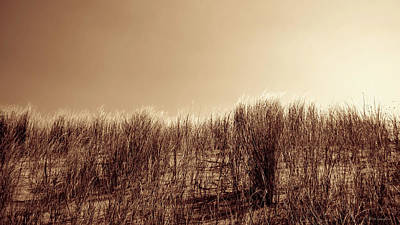 Beachgrass In Sepia Poster by Wim Lanclus