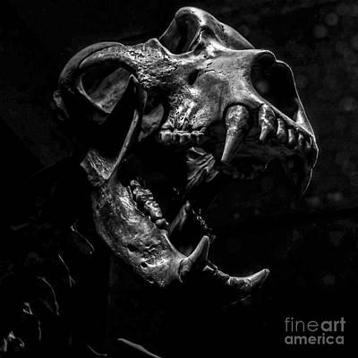 Bear Skull Square Poster