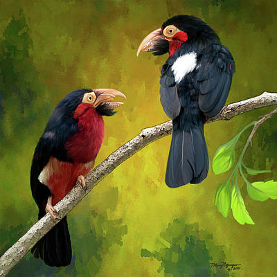 Bearded Barbets Poster by Thanh Thuy Nguyen
