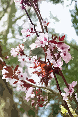 Beautiful Almond Blossoms Poster