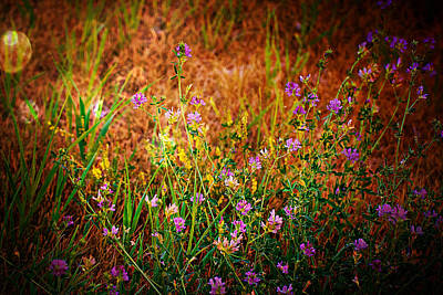Beautiful And Wild Flowers Poster
