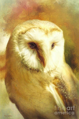Beautiful Barn Owl Poster by Tina LeCour