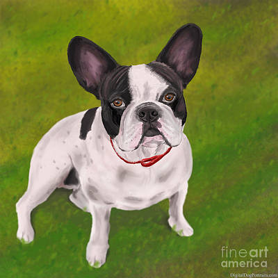 Beautiful Black And White French Bulldog On Grass Poster