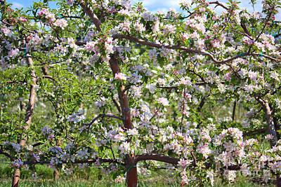 Beautiful Blossoms - Digital Art Poster