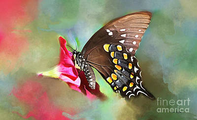 Beautiful Butterfly Poster by Tina LeCour