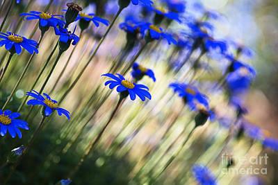 Beautiful Dancing Blue Flowers Romance Poster