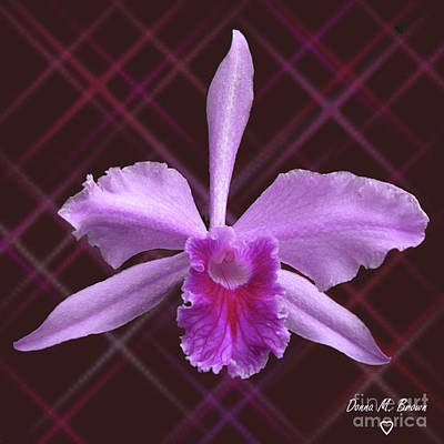 Poster featuring the photograph Beautiful Floating Orchid by Donna Brown