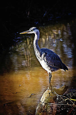 Beautiful Heron Standing In The Water Poster