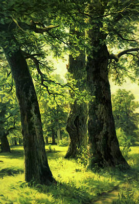 Beautiful Oak Trees Reach To The Skies Poster