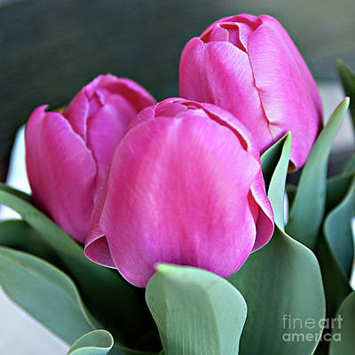 Beautiful Pink Lipstick Poster