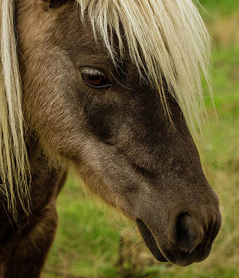 Beautiful Pony Face Poster by Jean Noren