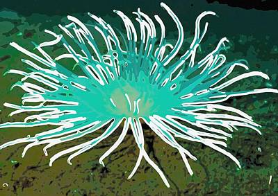 Beautiful Sea Anemone 2 Poster by Lanjee Chee