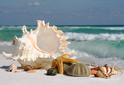 Beautiful Sea Shell On Sand Poster by Boon Mee