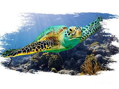Beautiful Sea Turtle On White Poster by Jon Neidert
