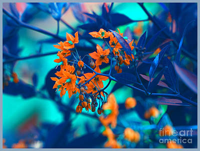 Poster featuring the photograph Beautiful Solanum Septemiobum Flowers  by Lance Sheridan-Peel