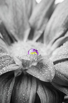Beautiful Splash Of Purple On A Daisy In The Garden Poster