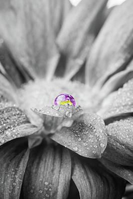 Beautiful Splash Of Purple On A Daisy In The Garden Poster