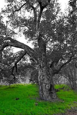 Beautiful Tree Poster by Bransen Devey