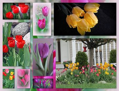 Beautiful Tulips Collage Poster by Kay Novy